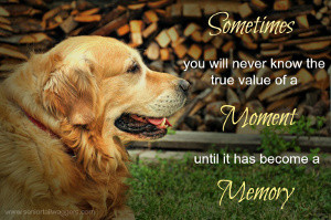 Heartwarming Old Dog Quotes