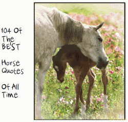 Found on horsemoms.com