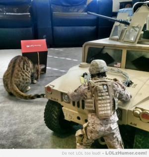 Funny Memes Marines capture leopard with the old box and stick trap.
