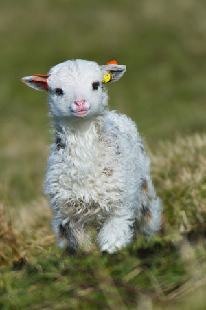 Baby animal pictures | List of top 40 cutest baby animals picture
