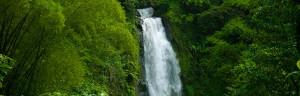 Information About Tropical Rainforest Animals