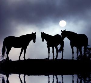 ... Amazing Hors, Horses In The Moonlight, Wild Hors, Black Hors, Animal