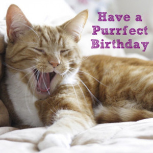 birthday cat card home quotes to live by quotes for gardeners quotes ...