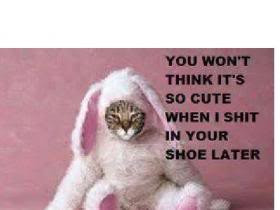 ... Think It's So Cute When I Shit In Your Shoe Later. ~ Cat Quotes