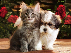 kitten and puppy picture kitten and puppy picture cool kitten and ...