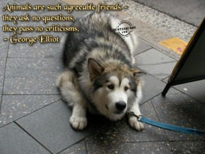 Animals are such agreeable friends, they ask no questions, they pass ...