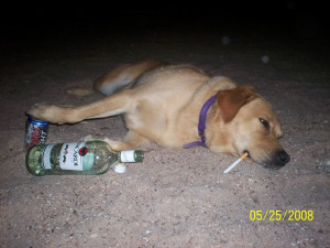 Drunk Funny Pictures Gallery