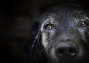Dealing with Behavior Problems in Senior Pets
