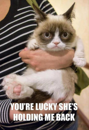 funny grumpy cat pictures