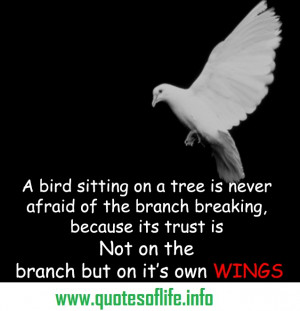 ... afraid-of-the-branch-breaking-because-her-trust-is-not-on-the-branch