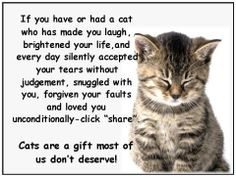 ... quotes cats quotes and pics i love more cat quotes pets i love cat