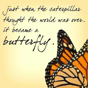 Butterflies are the most beautiful thing I've ever seen yet very ...