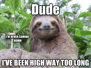 ... gallery for funny sloth memes dragon displaying 16 images for funny