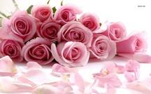 Rosa rose Bouquet Bilddatei - Blume-Image-Datei