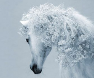 monochrome white mare horses widescreen with flowers HD Wallpaper of ...
