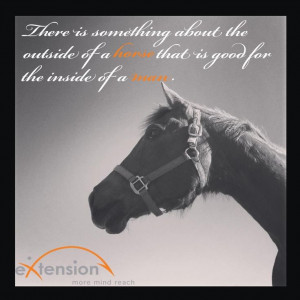 There is something about the outside of a horse that is good for the ...