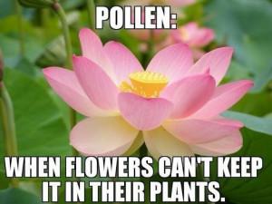Ugh, seasonal allergies...