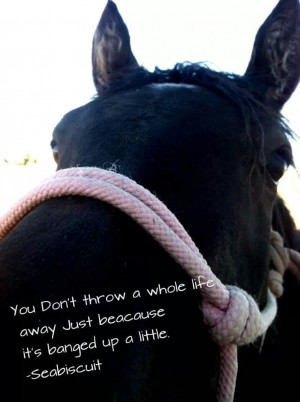 Horse rescue, you can change the whole world for one