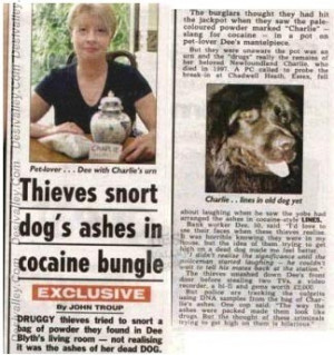 Thieves Snort Dogs Ashes In Cocaine Bungle Funny Picture