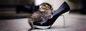 Kitten-Facebook-Cover