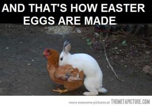 Funny photos funny bunny rabbit chicken hump
