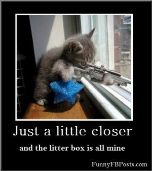 fail-cat-wtf-funny-pictures-images-quotes-lists-and-more-kootation ...