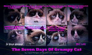 Grumpy Cat Birthday Quotes Grumpy cat-7 days-monday's