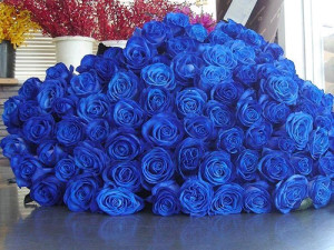 amazing-blue-blue-rose-cute-Favim.com-1029275.png