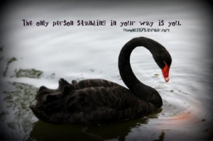 Photographed by #Michelle #Wong #black #swan #quote #wordart #art
