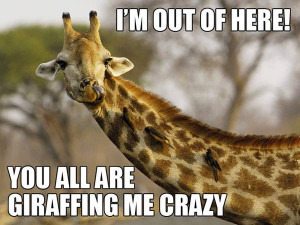 Thursday, February 07, 2013 animals , Funny Pic , sayings 0 Comments