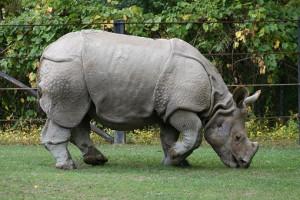 World Endangered Animals