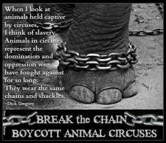 BREAK the CHAIN. BOYCOTT ANIMAL CIRCUSES. CIRCUS SHOULD BE ONLY CLOWNS ...
