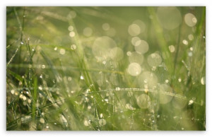 Grass Morning Dew Bokeh HD wallpaper for Standard 4:3 5:4 Fullscreen ...