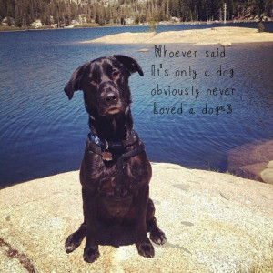 Black lab, dog quotes