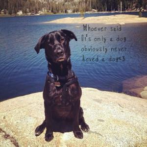 Black lab, dog quotes