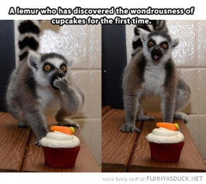lemur eating cupcakes animal funny pics pictures pic picture image ...