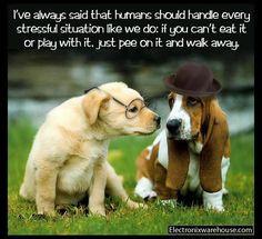 handle every stressful situation like a dog ~