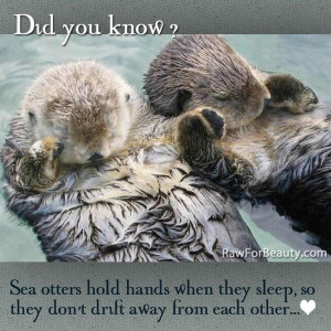 Sea otters.