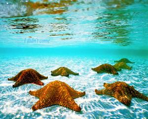 Starfish Underwater Wallpaper