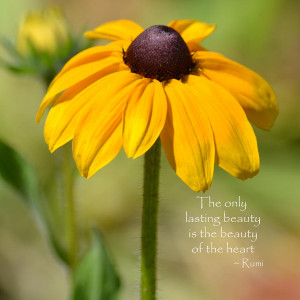 Sufi Quote Eyed susan with rumi quote