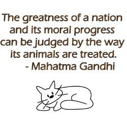gandhi_cat_quote_decal.jpg?height=250&width=250&padToSquare=true