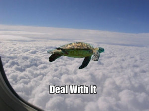 flying turtle says deal with it | image tagged in funny,turtles