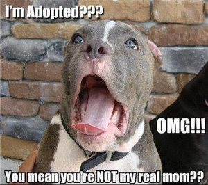 Adopted Dog