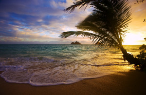 Paradise Vacation! Fun and Relaxation