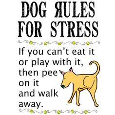 Funny Stress Quotes | Funny Quotes On Funny T-shirts