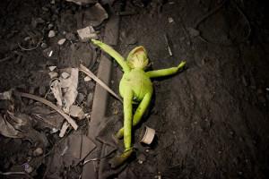 kermit-the-frog-is-dead.jpg