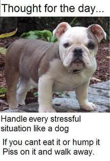 Dog Quotes (51)