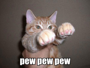 Funny cat life, cats life fun, funny cat images, image of funny cat ...