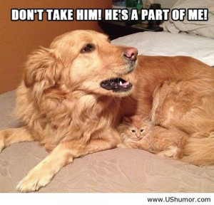 Funny dog and cat photo US Humor - Funny pictures, Quotes, Pics, Ph...