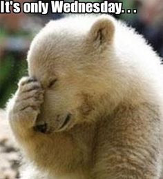 Its only Wednesday quotes quote days of the week wednesday hump day ...